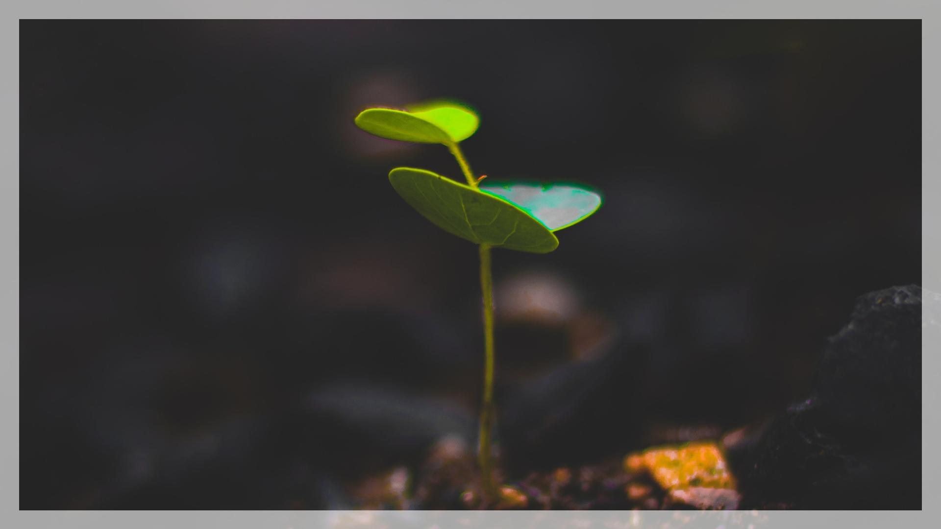 sme-financial-leadership-managing-growth